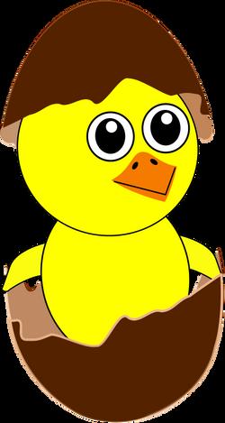 Chick_008_Newborn_Egg_Cartoon_chocolate