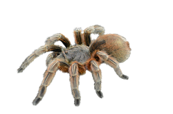 spider-1232384_Clip