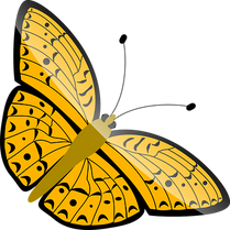 butterfly-33047__340.png