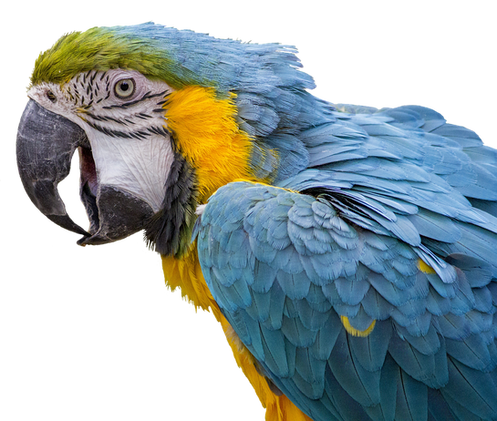 PNG images: Animals