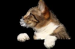 cat-1184981_Clip