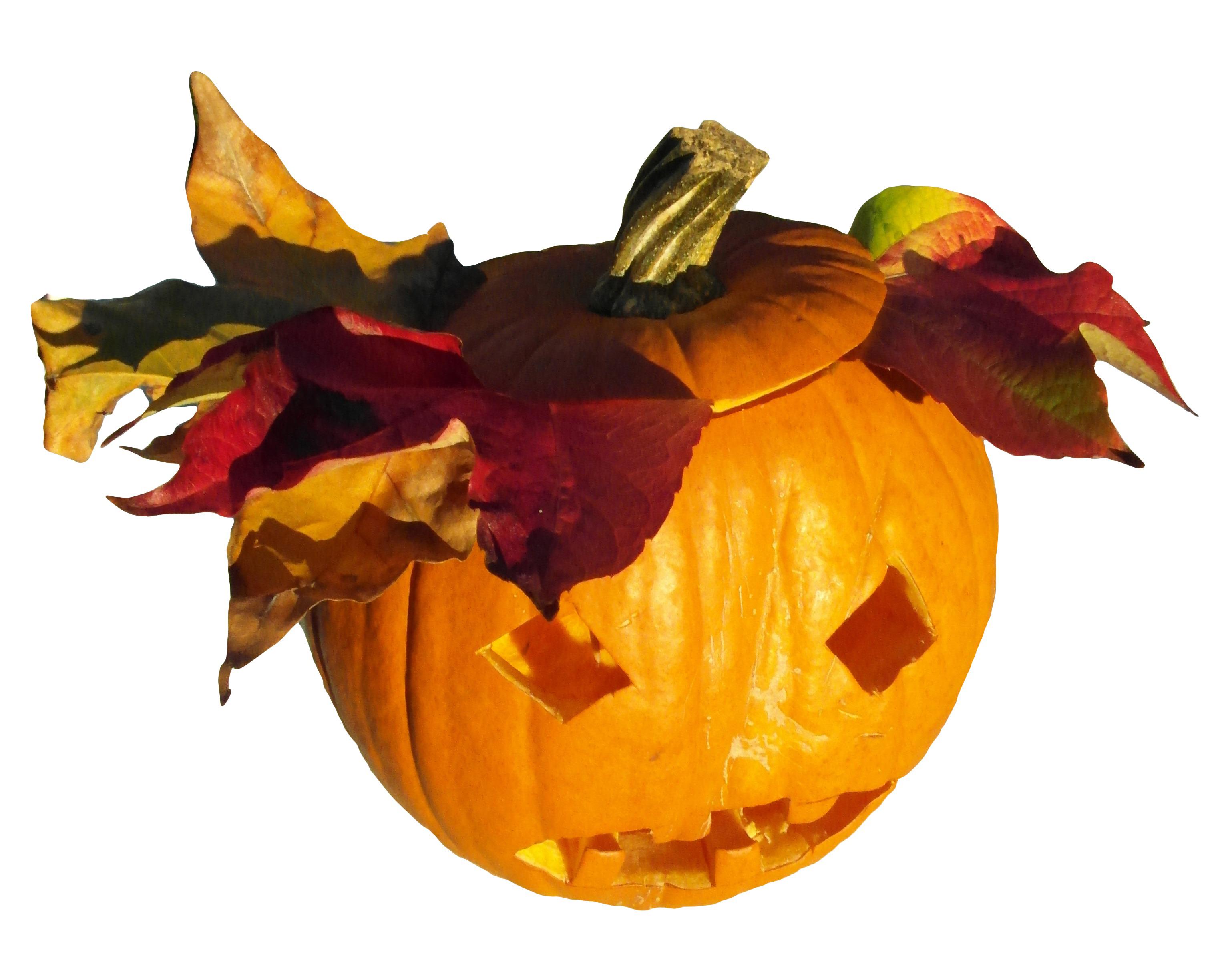 pumpkin-253000_Clip