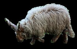 lamb-1078695_Clip
