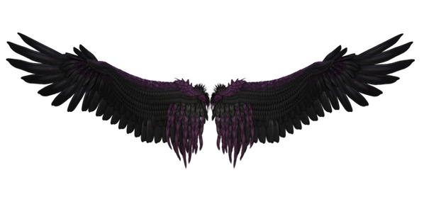 Wing-png-0