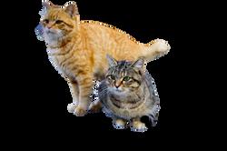 cat-1096821_Clip