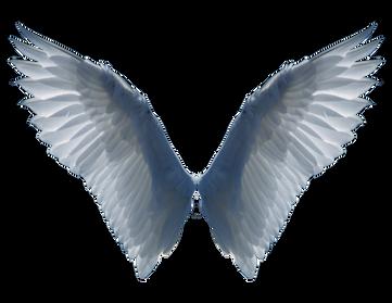 Wings-png-16