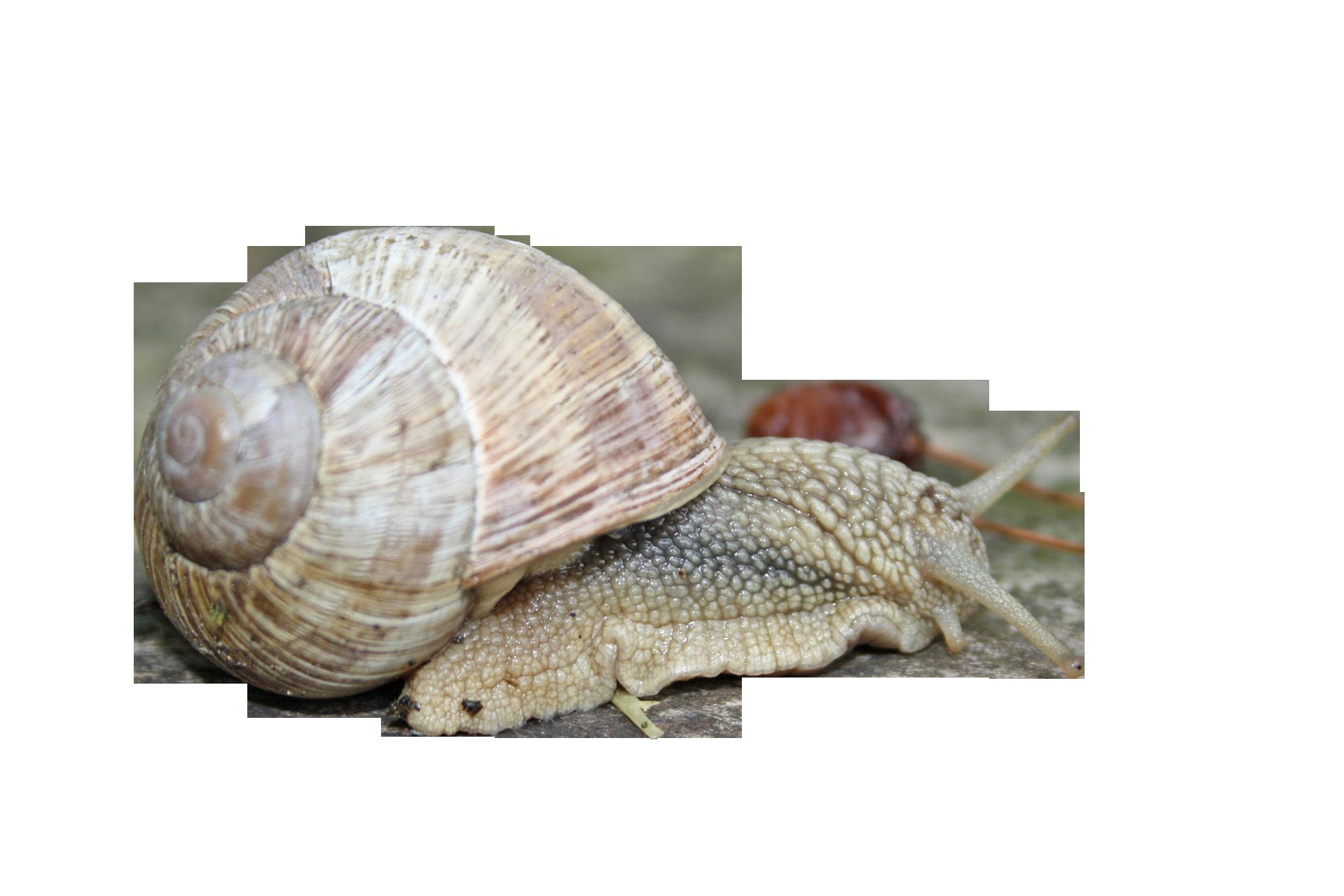 snail-1229166_Clip