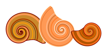 shell-3256691__340.png