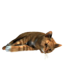 Free cat png images.
