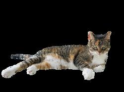 cat-1277662_Clip