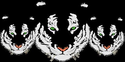 tiger-312245__340.png