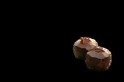 coconut-1201240_Clip