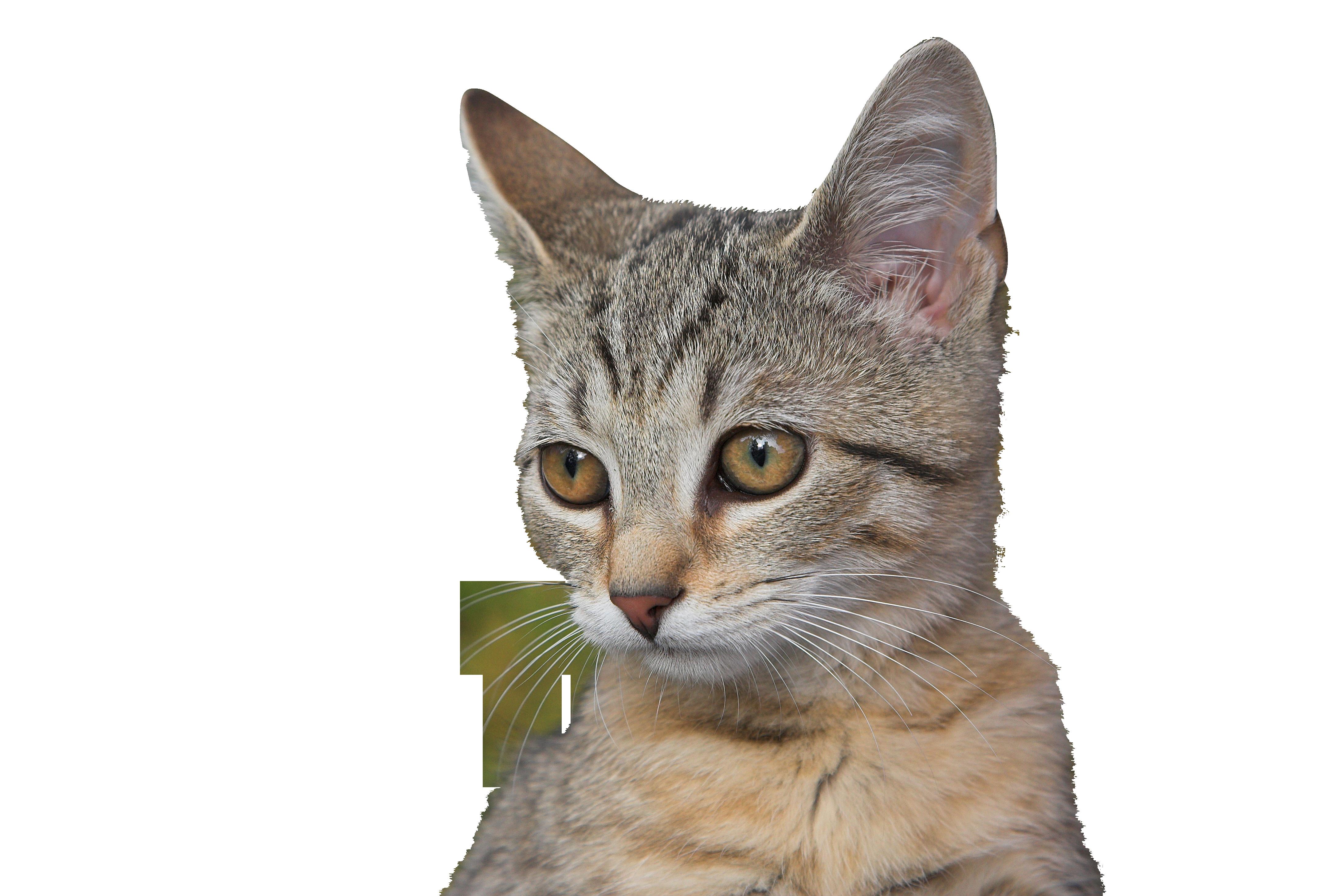 cats-1047460_Clip