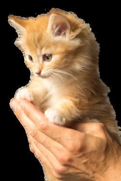 kitten-943275_Clip