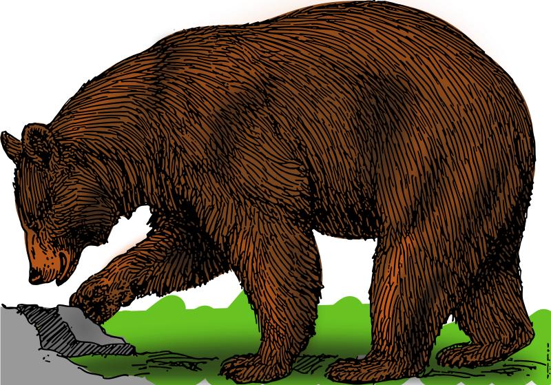 Black_bear_color_04