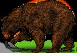 Black_bear_color_04