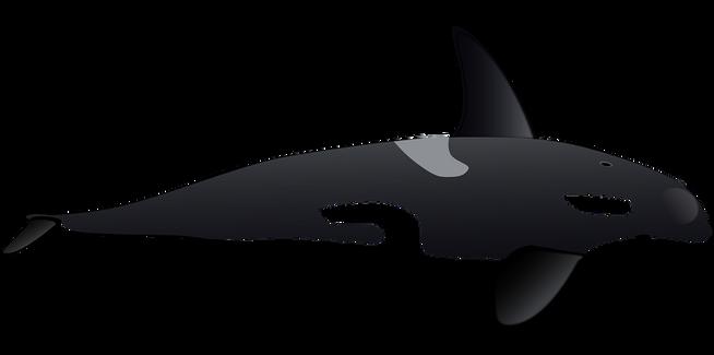 Whale free transparent cutouts