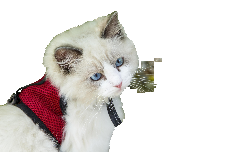 kitten-1040955_Clip