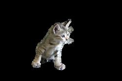 cat-166881_Clip