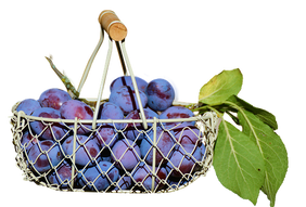 plums-in-the-basket-2644651__340.png