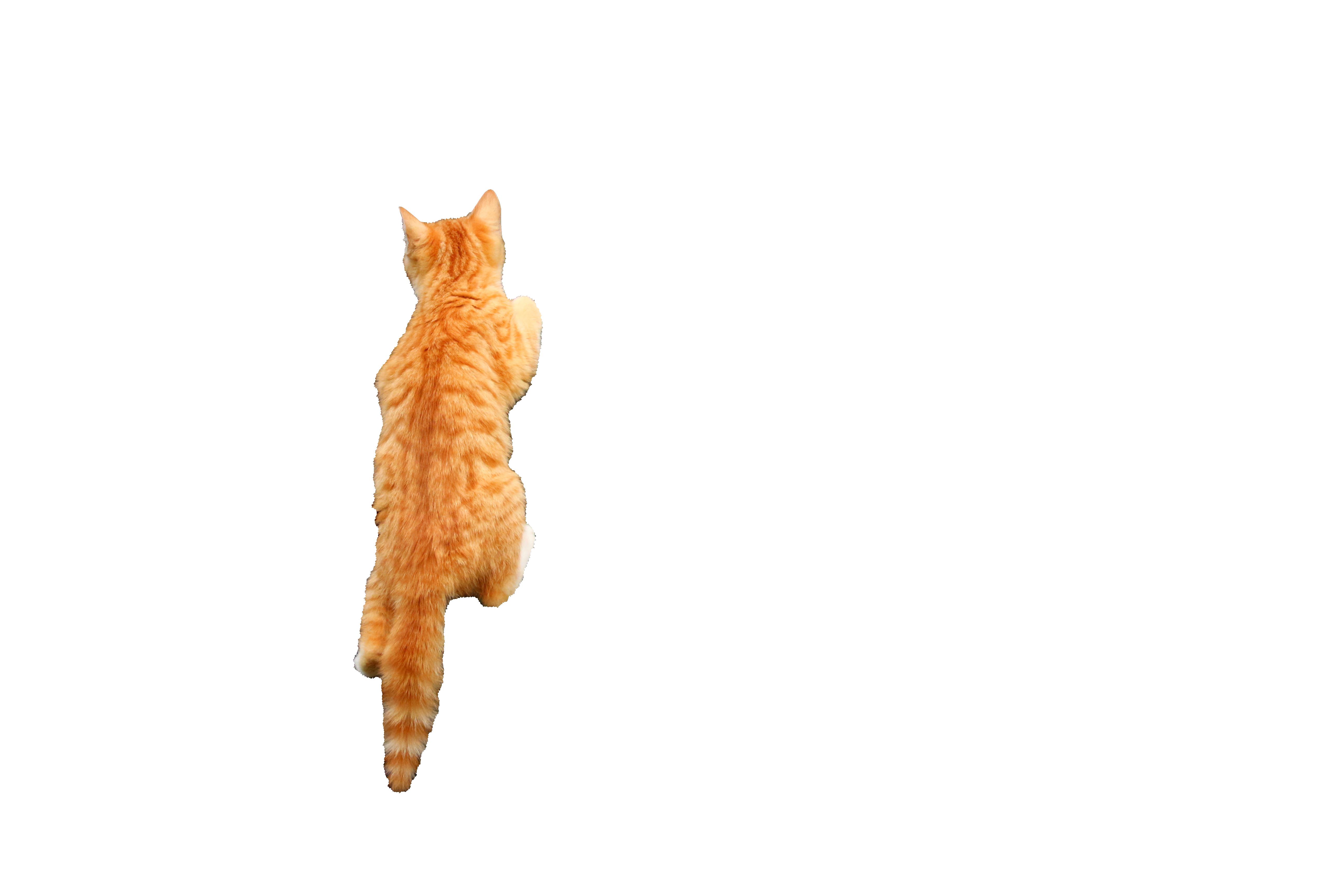 cat-1134615_Clip