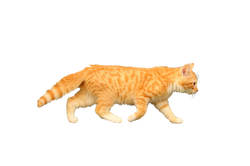 cat-1094292_Clip