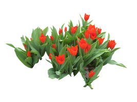 flowers-2194147__340.png