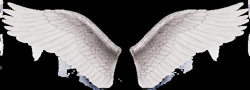 Wings-png-17