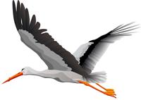 Stork free transparent images