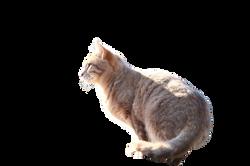 cat-1183091_Clip