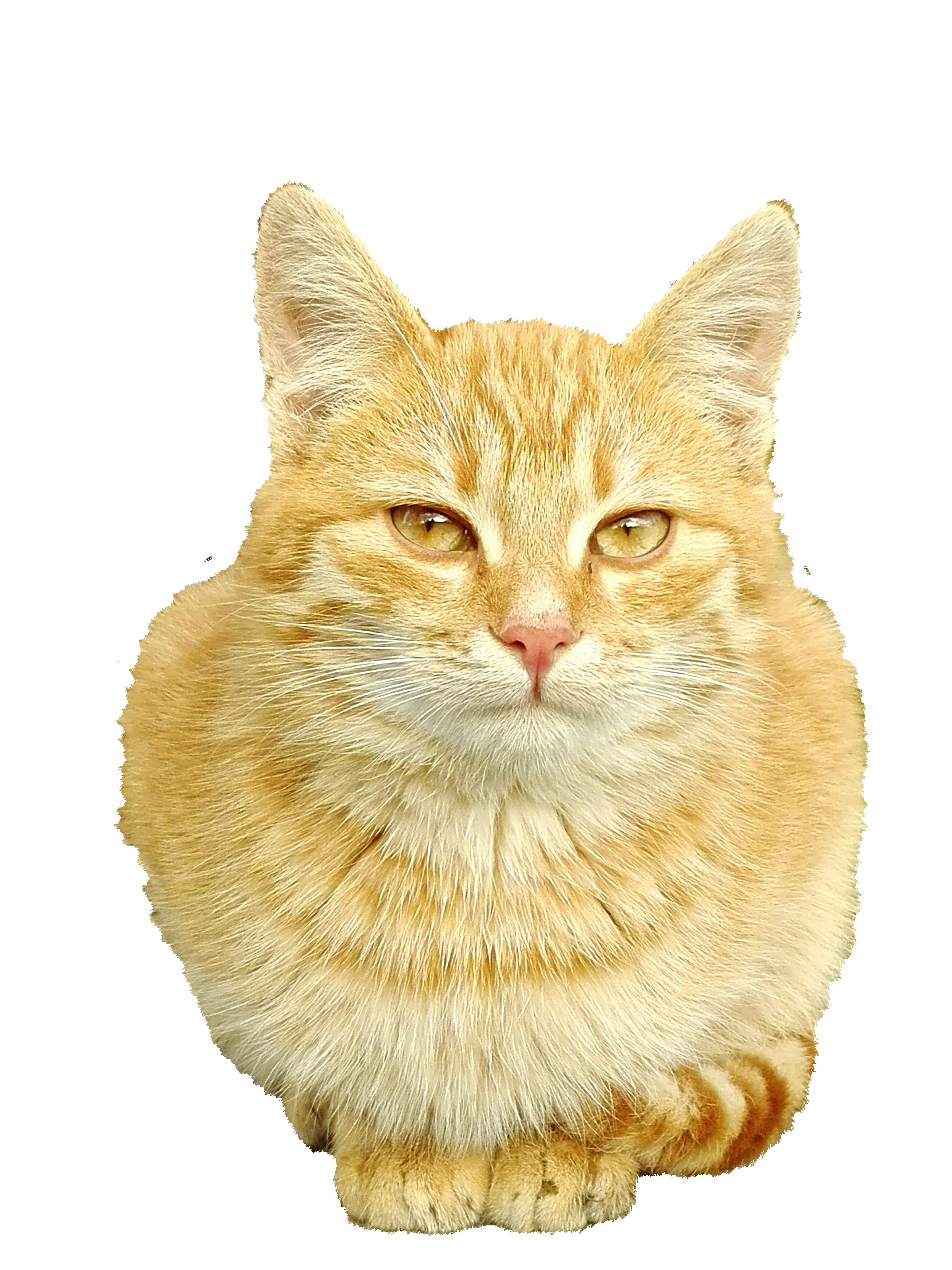 cat-1196794_Clip