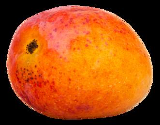 Mango-PNG-Image1.png