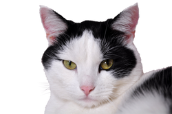 cats-796437_Clip