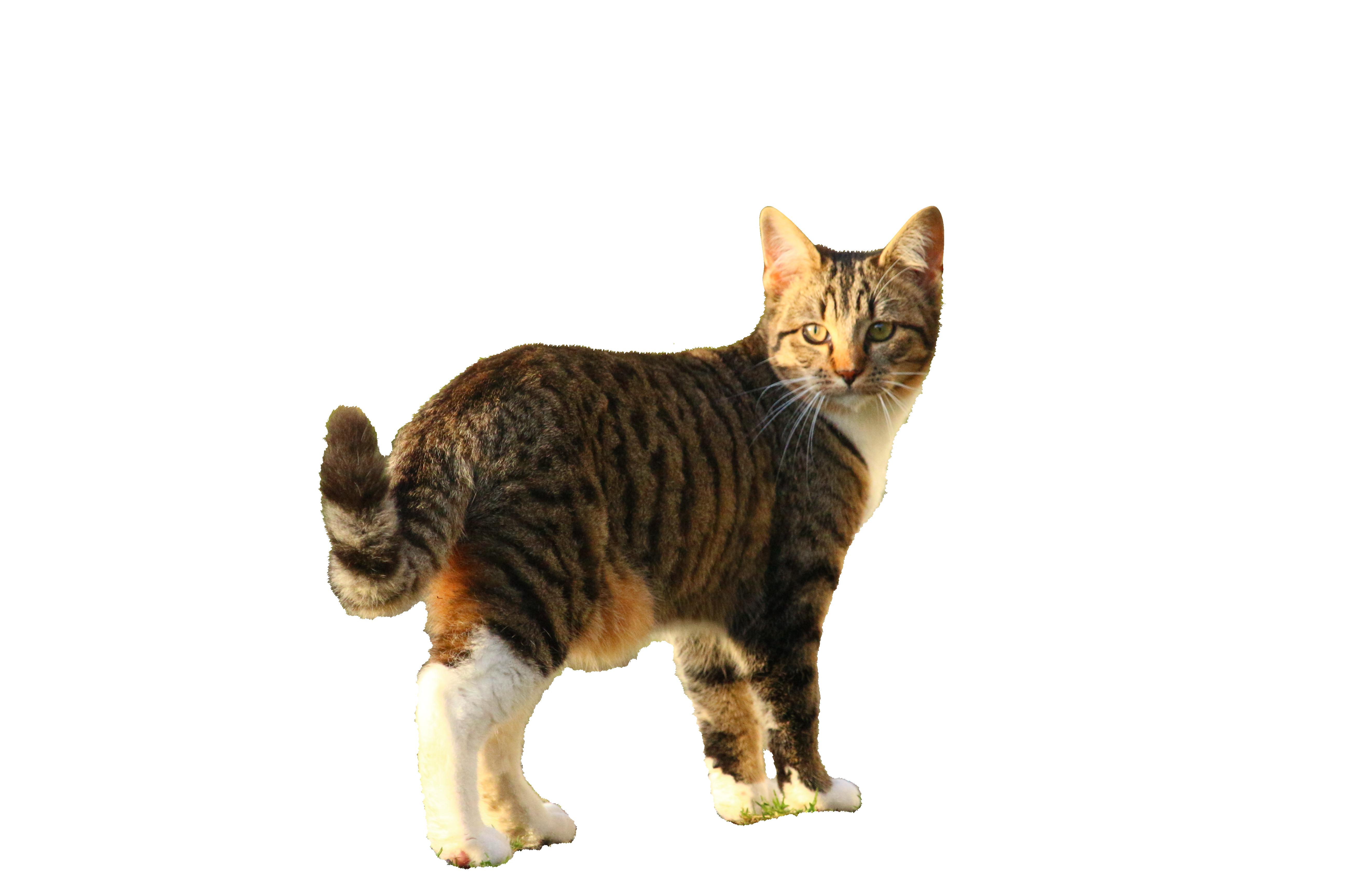 cat-1074729_Clip