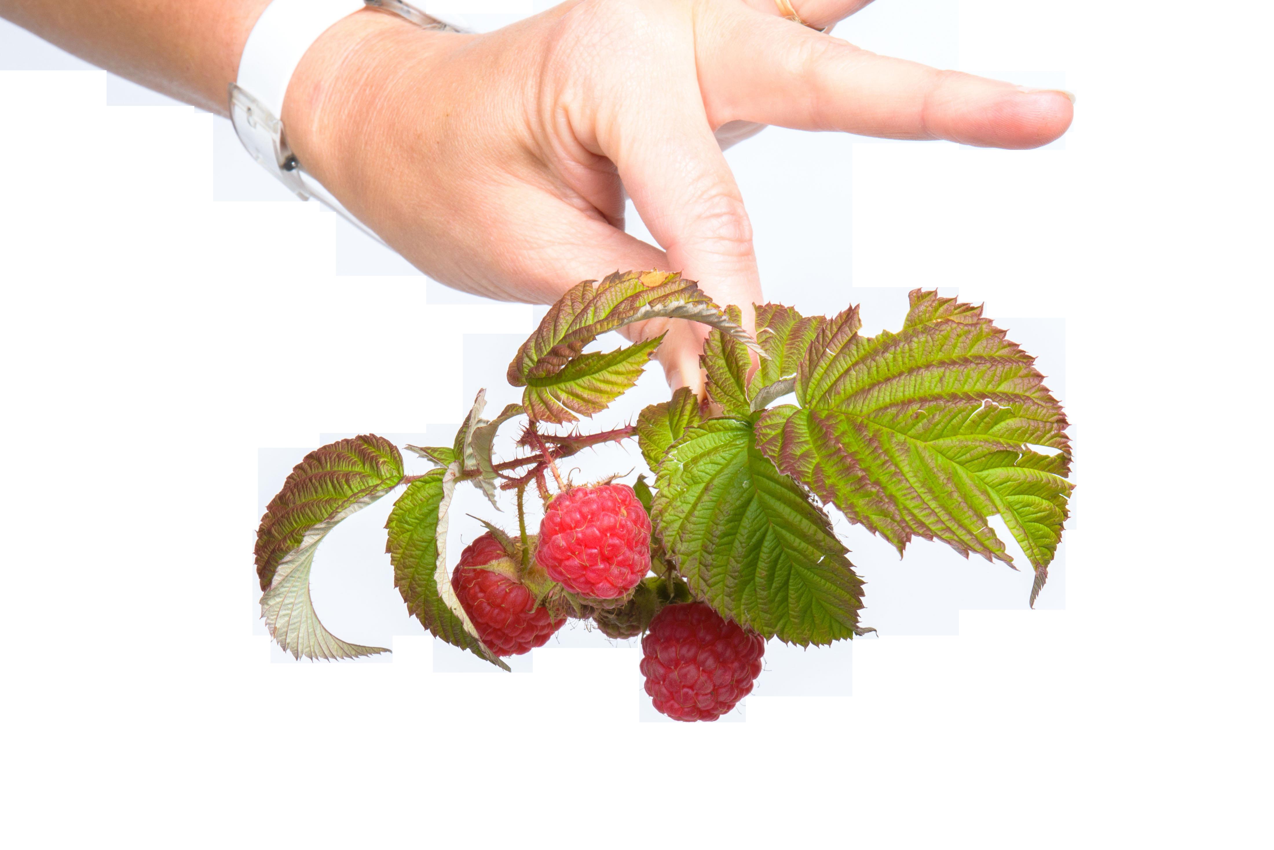 fruit-539129_Clip