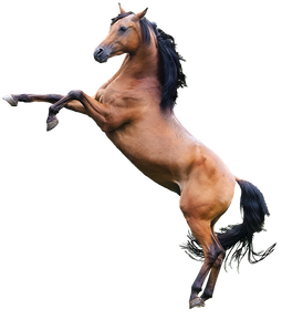 PNG images: horse