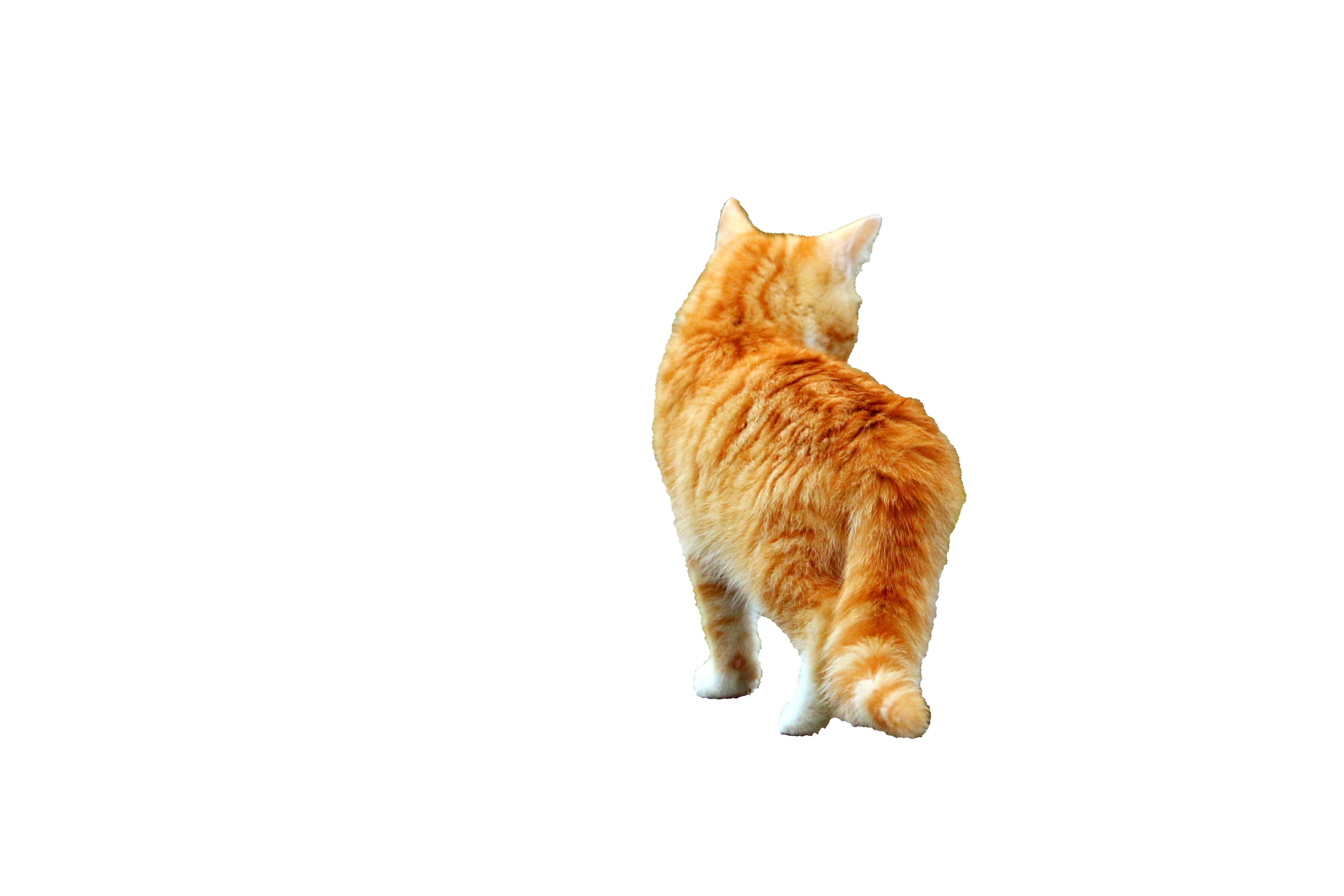 cat-1099754_Clip
