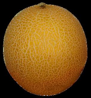 Melon-PNG-Image3.png