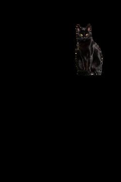 cat-1166311_Clip