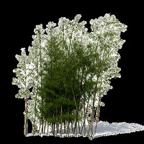 Bamboo (8).png