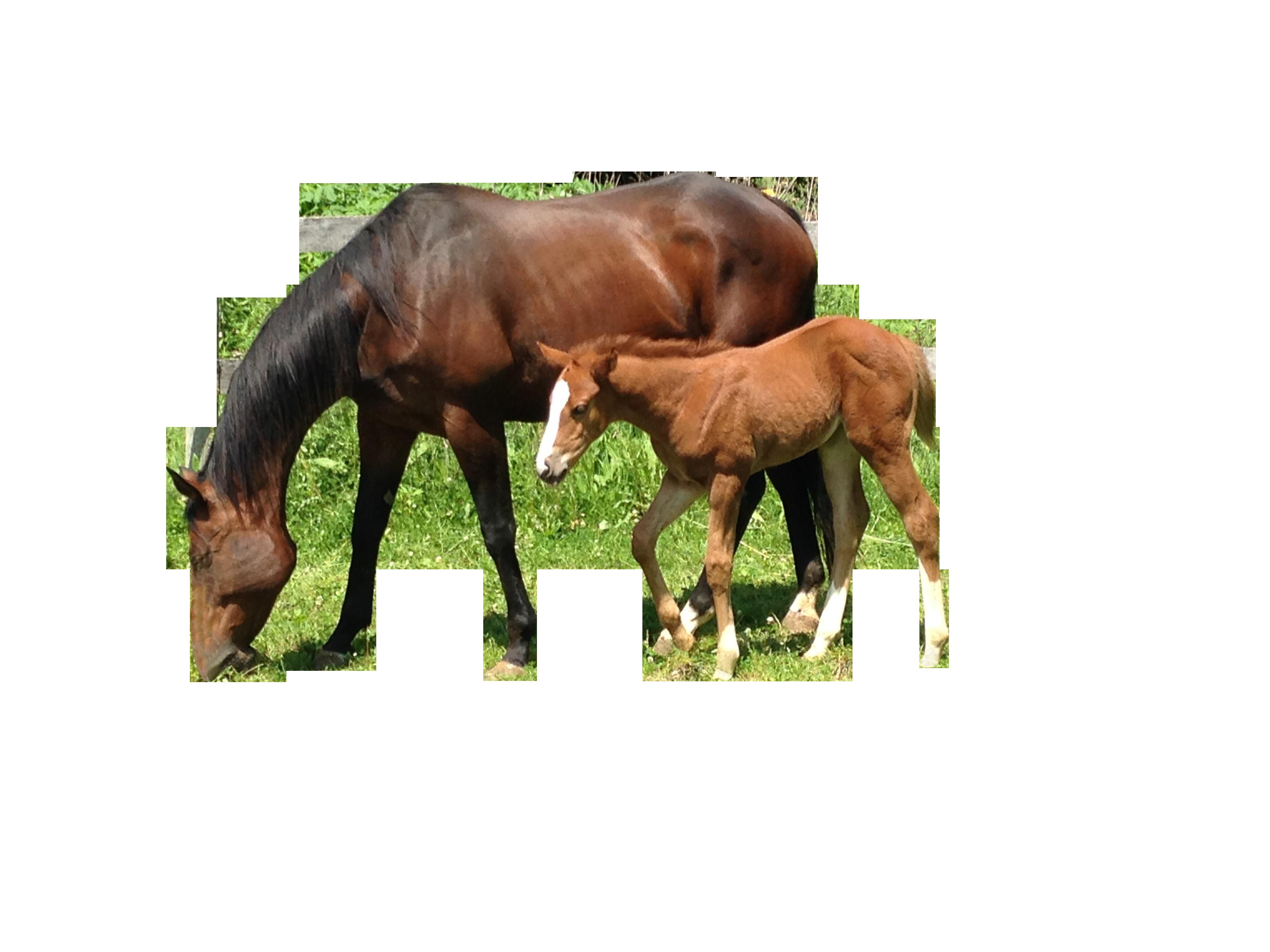 horse-860465_Clip