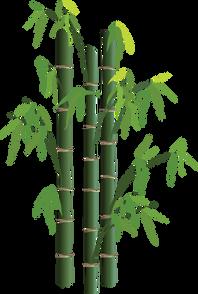 Bamboo (30).png