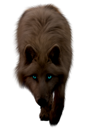 PNG images: Wolf
