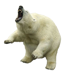 Complete animal free PNG collection, Free PNGs has tens of thousands of free transparent cutout PNG  images to download today.   - Top transparent PNG images. - Biggest PNG collection on the net.  - Unlimited downloads. - Check out our polar bear collection today.