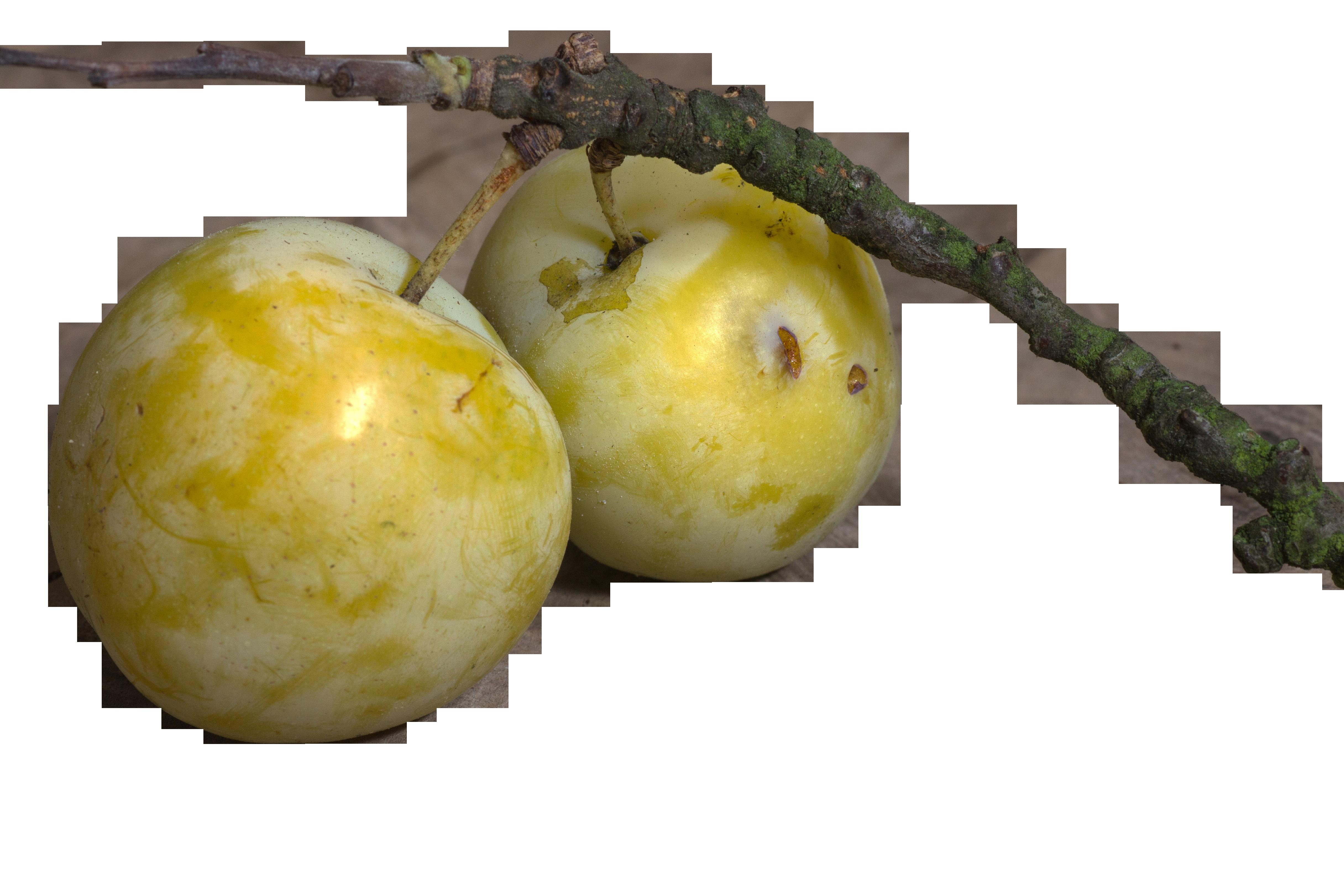fruit-952433_Clip