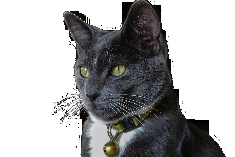 cat-1011739_Clip