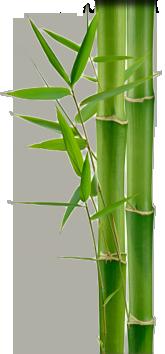 Bamboo (23).png