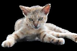 cat-1264409_Clip