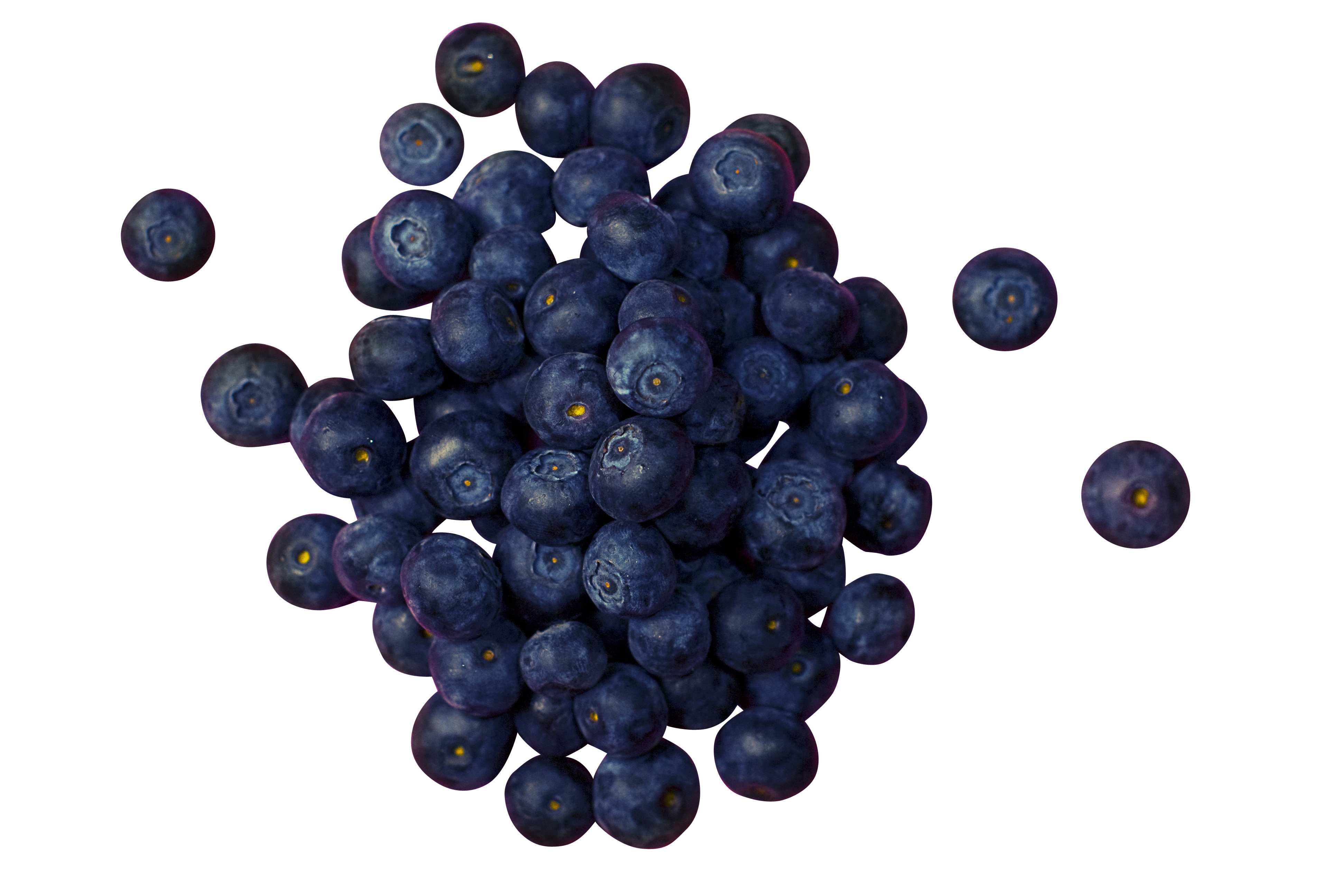 blueberries-933545_Clip