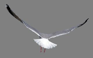 Bird PNG images